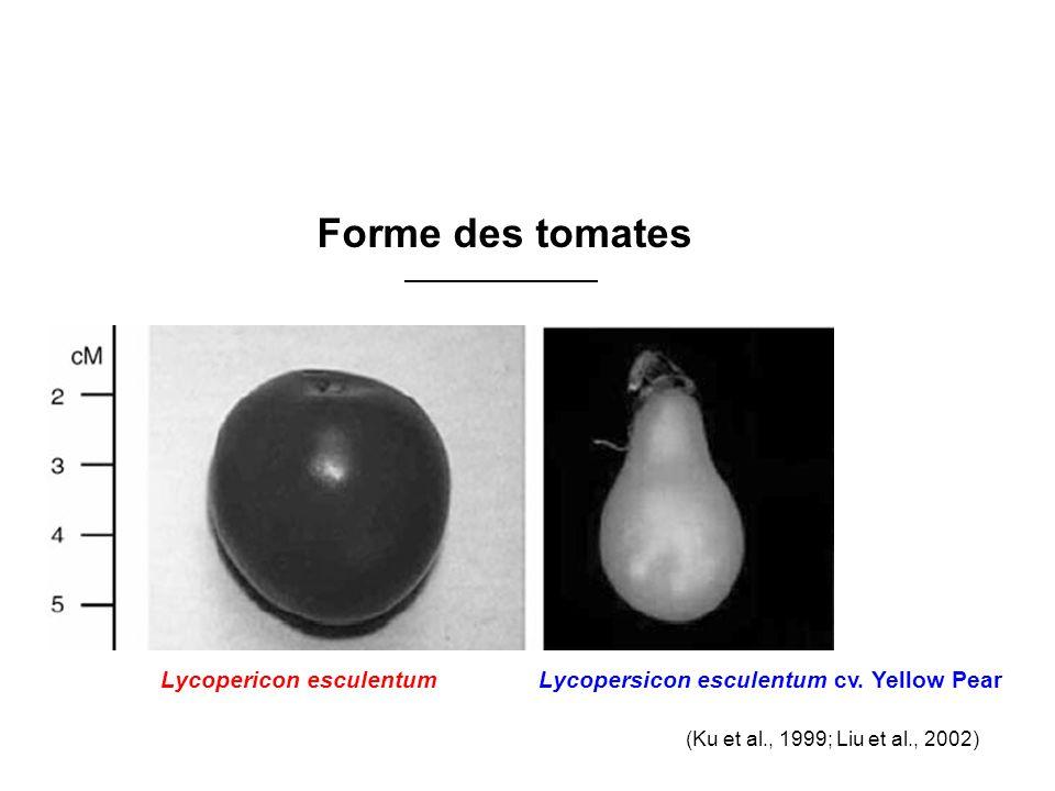 Forme des tomates (Ku et al., 1999; Liu et al., 2002) Lycopersicon esculentum cv.