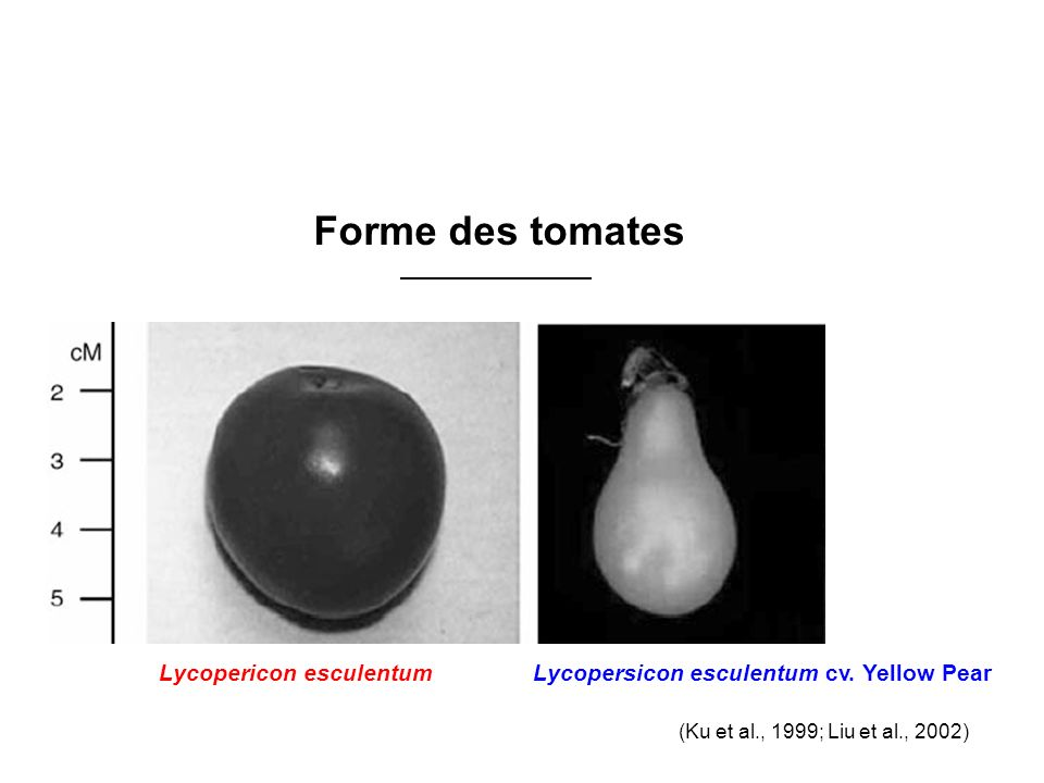 www.szbk.u-szeged.hu/ 4 genetic loci 9 genetic loci 19 genetic loci (Coyne 1983, MacDonald et al.