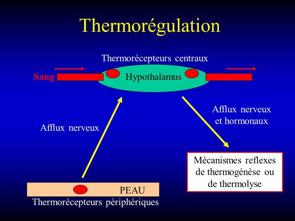 Thermorégulation Hypothalamus Afflux nerveux PEAU Thermorécepteurs périphériques Thermorécepteurs centraux Sang Afflux nerveux et hormonaux Mécanismes