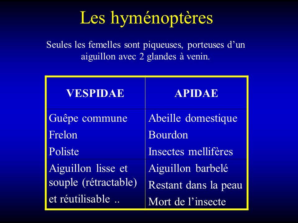 Les hyménoptères VESPIDAEAPIDAE Guêpe commune Frelon Poliste Abeille domestique Bourdon Insectes mellifères Aiguillon lisse et souple (rétractable) et réutilisable..