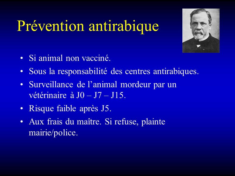 Prévention antirabique Si animal non vacciné. Sous la responsabilité des centres antirabiques. Surveillance de lanimal mordeur par un vétérinaire à J0