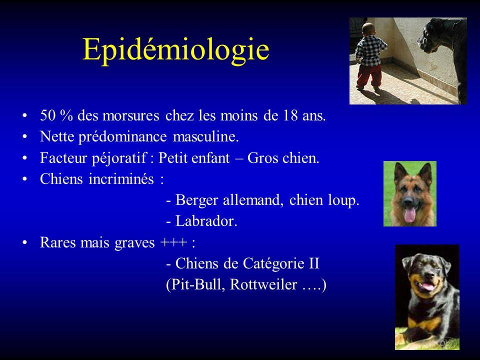 Epidémiologie 50 % des morsures chez les moins de 18 ans. Nette prédominance masculine. Facteur péjoratif : Petit enfant – Gros chien. Chiens incrimin