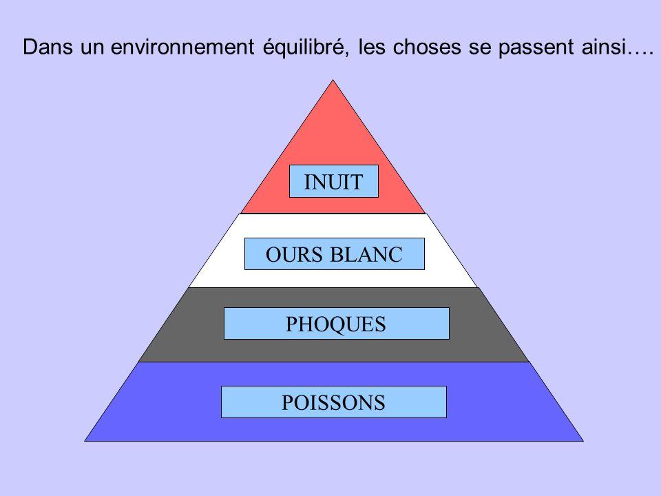 Les Pyramides évolutives Journée de lenvironnement JARRIE