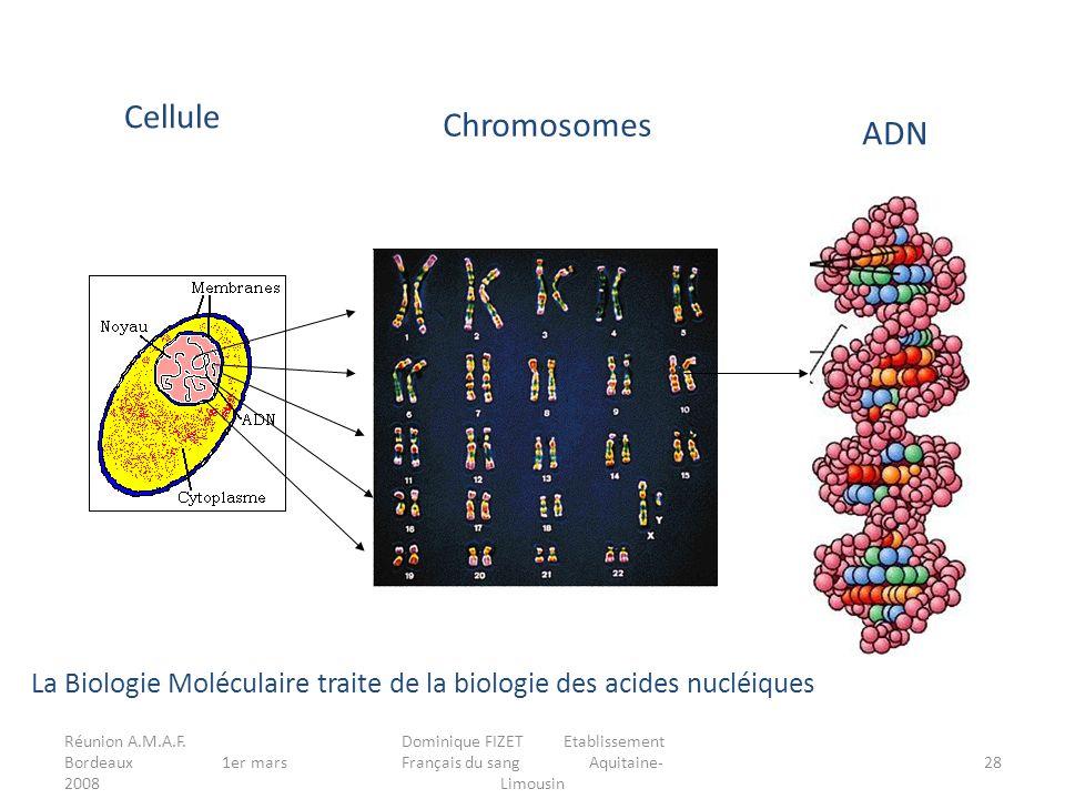 Réunion A.M.A.F. Bordeaux 1er mars 2008 Dominique FIZET Etablissement Français du sang Aquitaine- Limousin 28 Cellule Chromosomes ADN La Biologie Molé