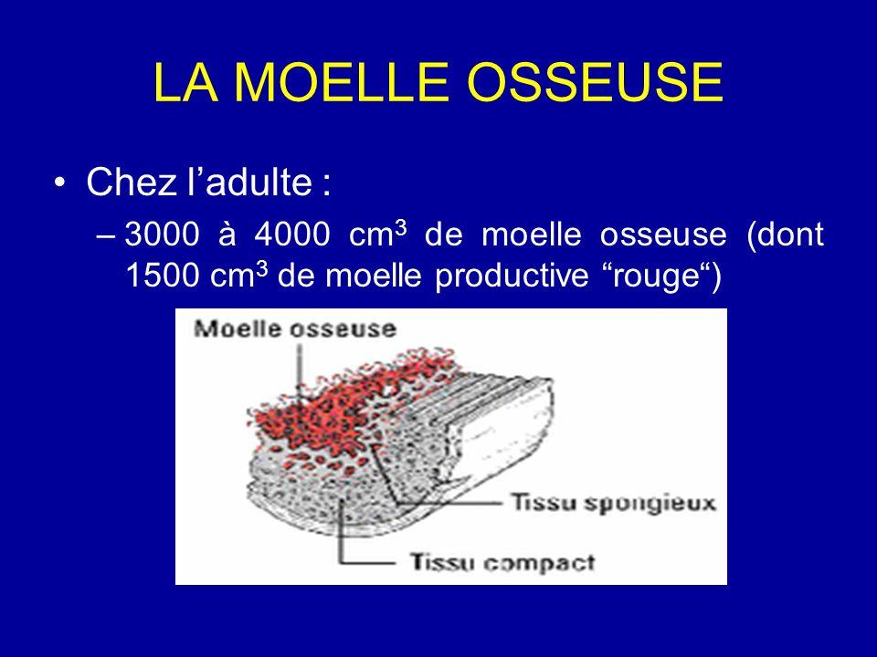 LA MOELLE OSSEUSE Chez ladulte : –3000 à 4000 cm 3 de moelle osseuse (dont 1500 cm 3 de moelle productive rouge)