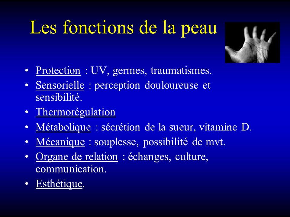 Les fonctions de la peau Protection : UV, germes, traumatismes. Sensorielle : perception douloureuse et sensibilité. Thermorégulation Métabolique : sé