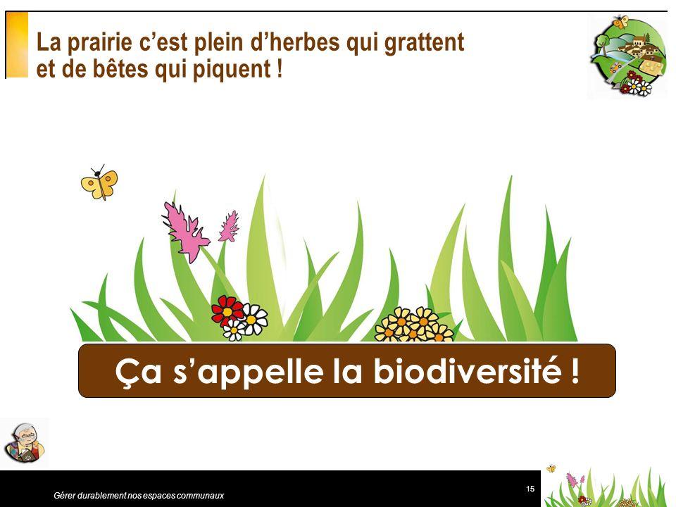 15 Gérer durablement nos espaces communaux La prairie cest plein dherbes qui grattent et de bêtes qui piquent ! Ça sappelle la biodiversité !
