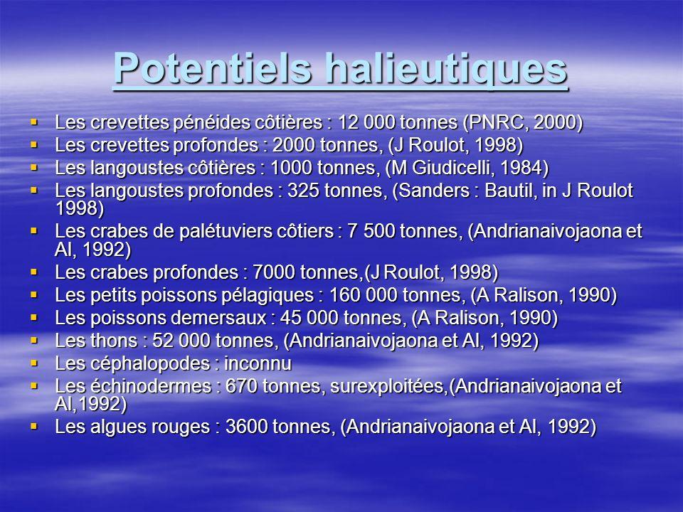 Potentiels halieutiques Les crevettes pénéides côtières : 12 000 tonnes (PNRC, 2000) Les crevettes pénéides côtières : 12 000 tonnes (PNRC, 2000) Les