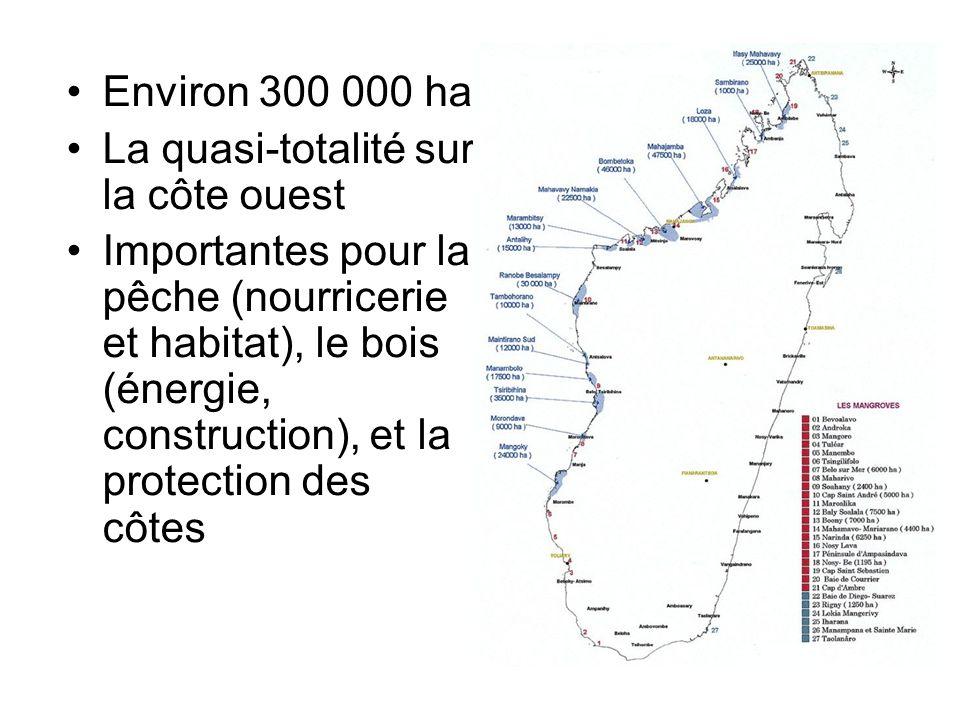 Environ 300 000 ha La quasi-totalité sur la côte ouest Importantes pour la pêche (nourricerie et habitat), le bois (énergie, construction), et la prot