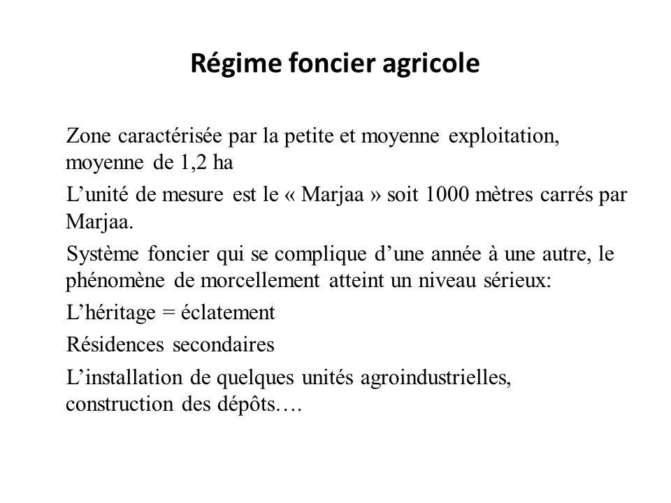 Régime foncier agricole Zone caractérisée par la petite et moyenne exploitation, moyenne de 1,2 ha Lunité de mesure est le « Marjaa » soit 1000 mètres
