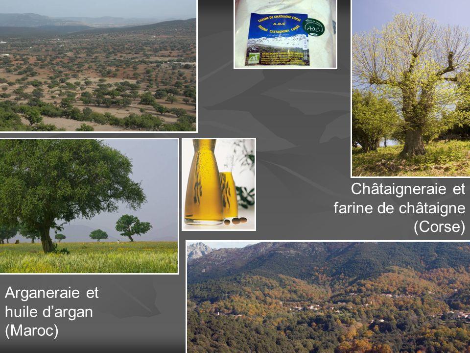 Arganeraie et huile dargan (Maroc) Châtaigneraie et farine de châtaigne (Corse)