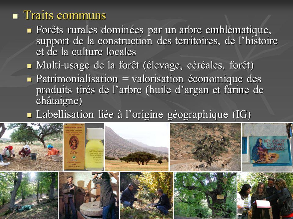 Traits communs Traits communs Forêts rurales dominées par un arbre emblématique, support de la construction des territoires, de lhistoire et de la cul