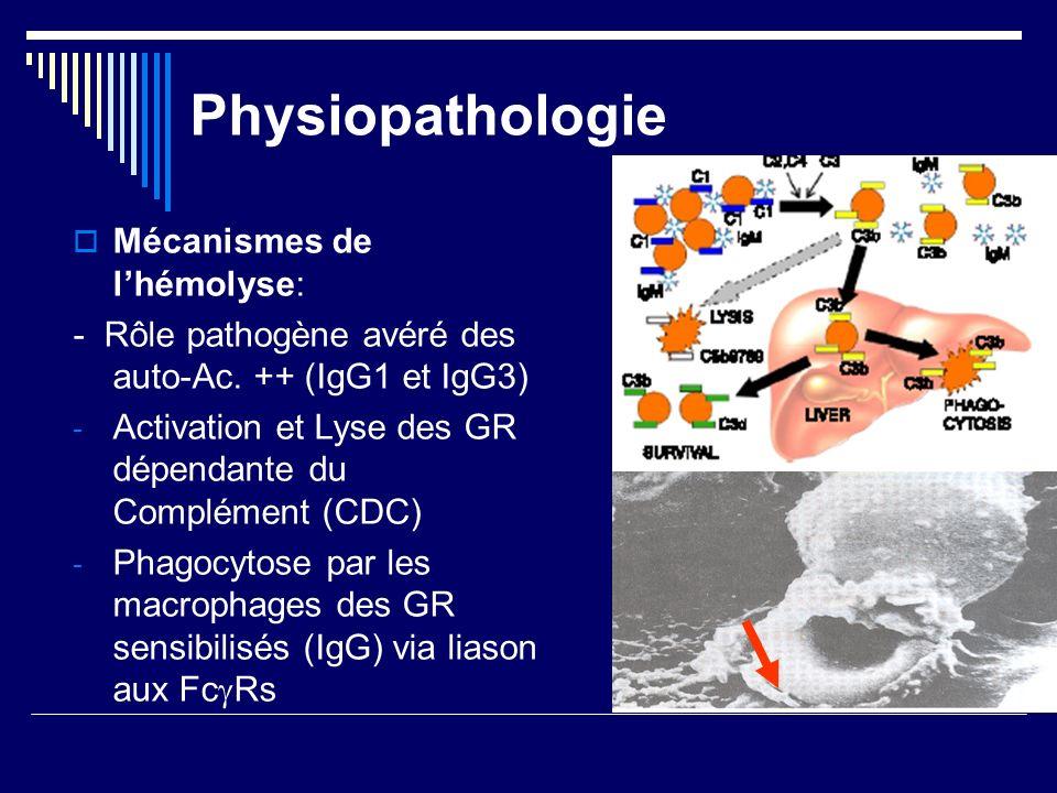 Physiopathologie Mécanismes de lhémolyse: - Rôle pathogène avéré des auto-Ac. ++ (IgG1 et IgG3) - Activation et Lyse des GR dépendante du Complément (