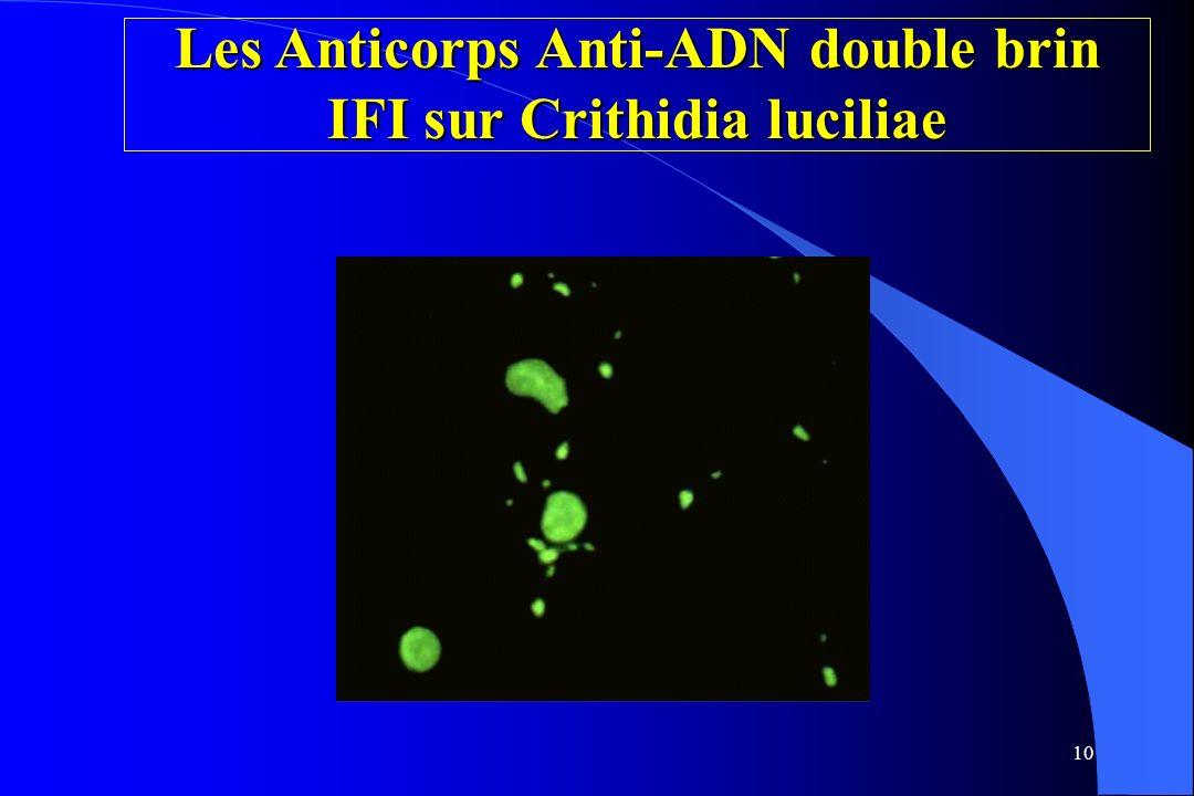 10 Les Anticorps Anti-ADN double brin IFI sur Crithidia luciliae