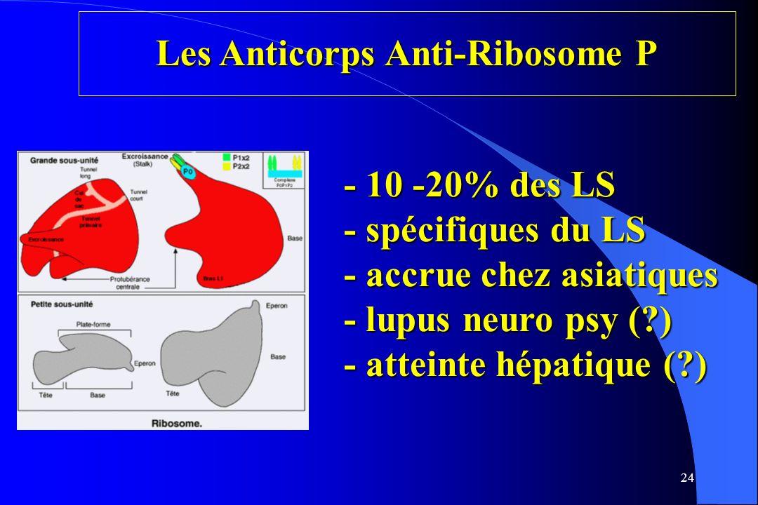 24 Les Anticorps Anti-Ribosome P - 10 -20% des LS - spécifiques du LS - accrue chez asiatiques - lupus neuro psy (?) - atteinte hépatique (?)