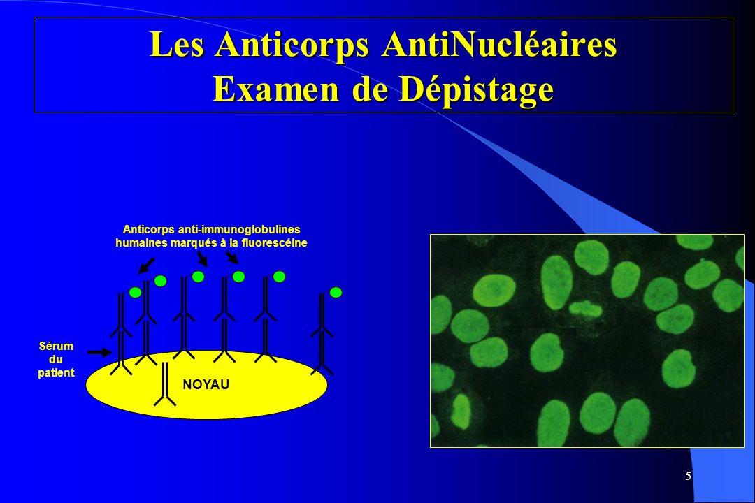 5 NOYAU Sérum du patient Anticorps anti-immunoglobulines humaines marqués à la fluorescéine Les Anticorps AntiNucléaires Examen de Dépistage