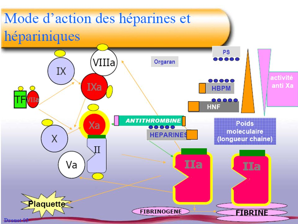 Rivaroxaban : anti-Xa direct Caractéristiques Voie orale, inhibition compétitive du Xa PK PD prédictibles, ½ vie 9h, pas d interactions Biodisponibilité élevée, pas de métabolite 2 modes d excrétion : rénal et biliaire Etudes Prévention chir ortho (RECORD Eriksson T & H 2006) 10 mg Recherche de dose (OdiXa-DVT Agnelli Circ 2007) VTE : EINSTEIN (en cours) FA (en cours)