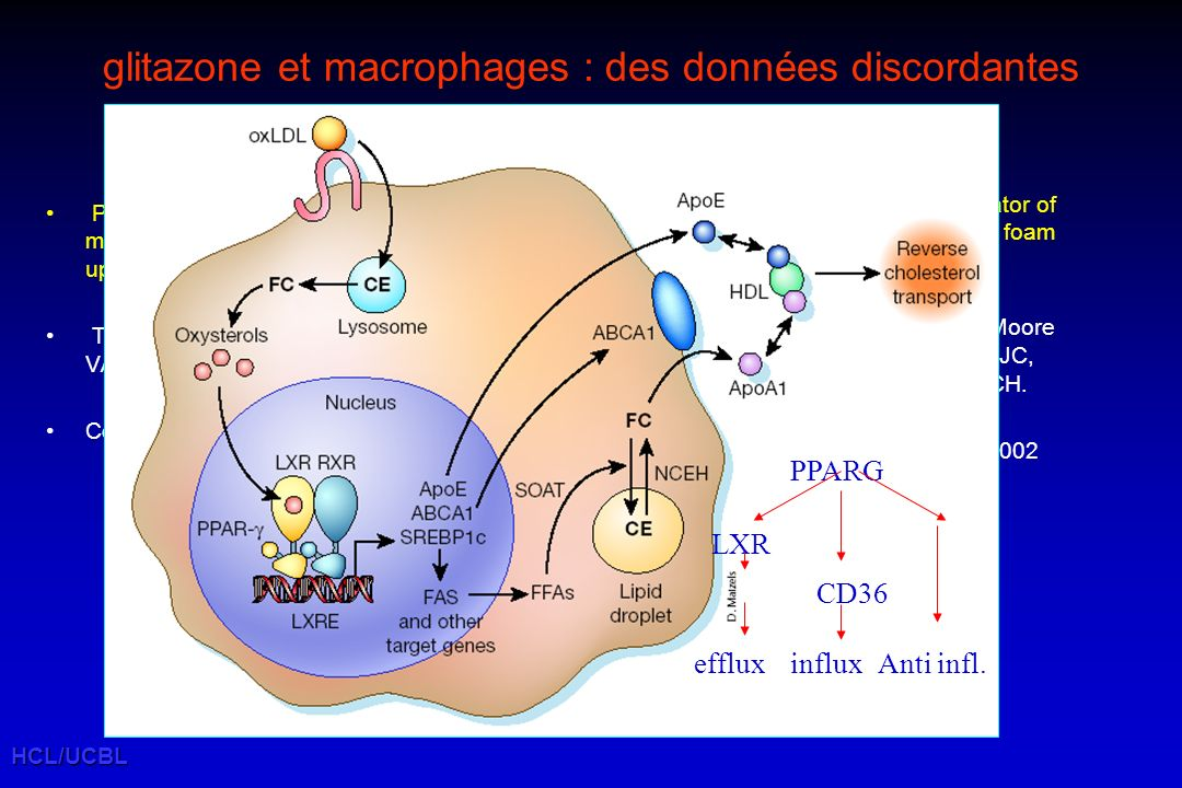 HCL/UCBL glitazone et macrophages : des données discordantes PPARgamma is not a critical mediator of primary monocyte differentiation or foam cell for