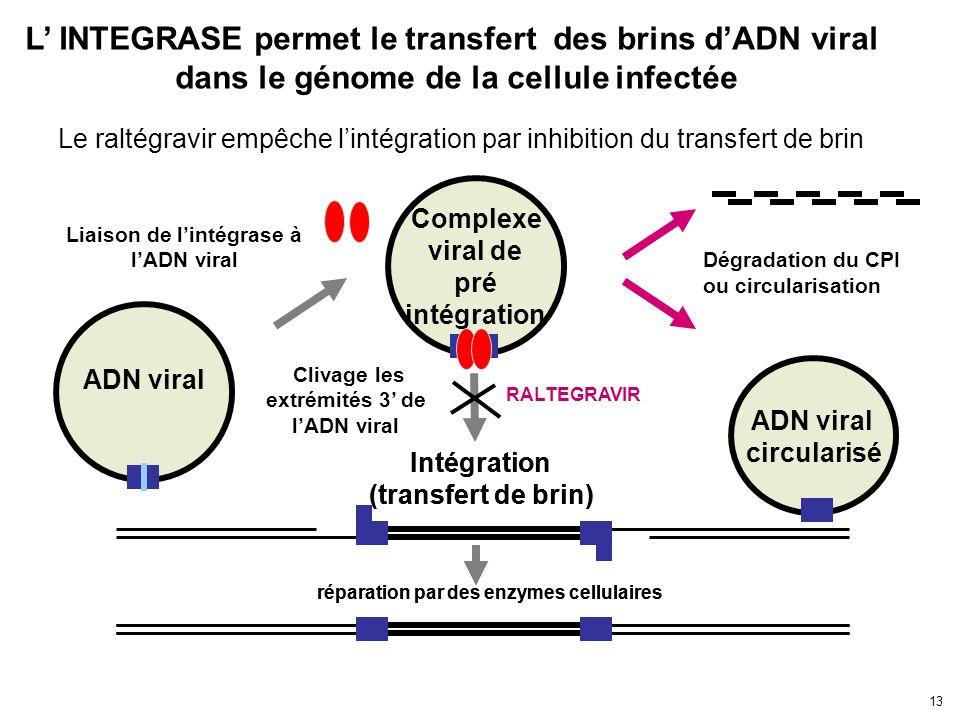 13 ADN viral Complexe viral de pré intégration Liaison de lintégrase à lADN viral Intégration (transfert de brin) réparation par des enzymes cellulair