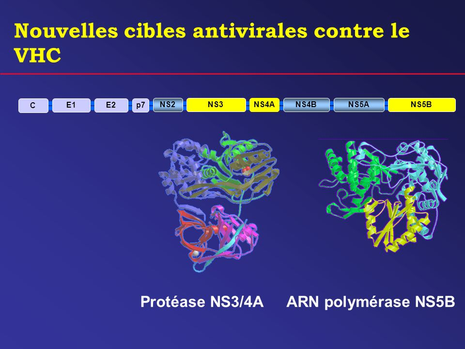 Nouvelles cibles antivirales contre le VHC ARN polymérase NS5B C E1E2p7 NS2NS3NS4ANS4BNS5ANS5B Protéase NS3/4A