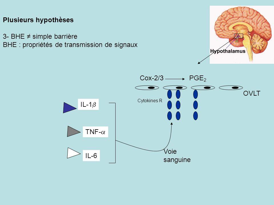 Plusieurs hypothèses 3- BHE simple barrière BHE : propriétés de transmission de signaux IL-1 TNF- IL-6 Voie sanguine Cytokines R OVLT Cox-2/3PGE 2