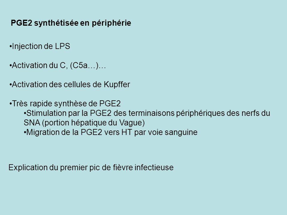 PGE2 synthétisée en périphérie Injection de LPS Activation du C, (C5a…)… Activation des cellules de Kupffer Très rapide synthèse de PGE2 Stimulation p