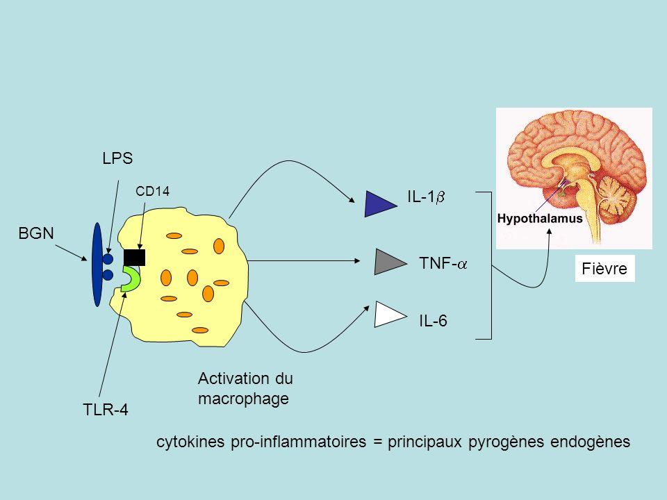 IL-1 TNF- IL-6 LPS BGN Fièvre cytokines pro-inflammatoires = principaux pyrogènes endogènes TLR-4 Activation du macrophage CD14