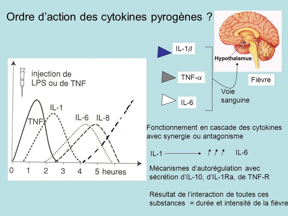 Ordre daction des cytokines pyrogènes ? IL-1 TNF- IL-6 Fièvre Voie sanguine Fonctionnement en cascade des cytokines avec synergie ou antagonisme IL-1