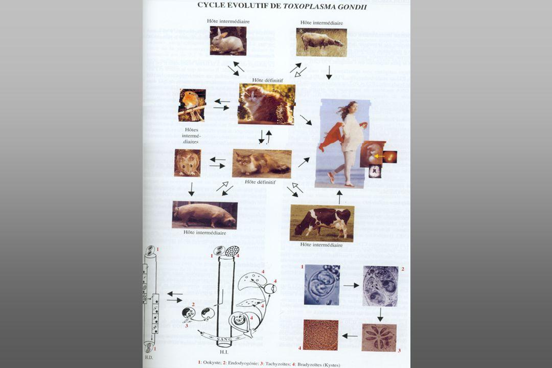 La toxoplasmose congénitale La plupart des atteintes oculaires sont liées à une infection congénitale Le parasite est transmis in utéro après une primo-infection chez une mère séronégative La fréquence de linfection du nné dépend du stade de la grossesse La gravité de latteinte du fœtus dépend également du stade Diapositive 7 Diapositive 7 Traitement : de la mère et de l enfant réduit le risque d atteinte grave Diapositive 8 Diapositive 8