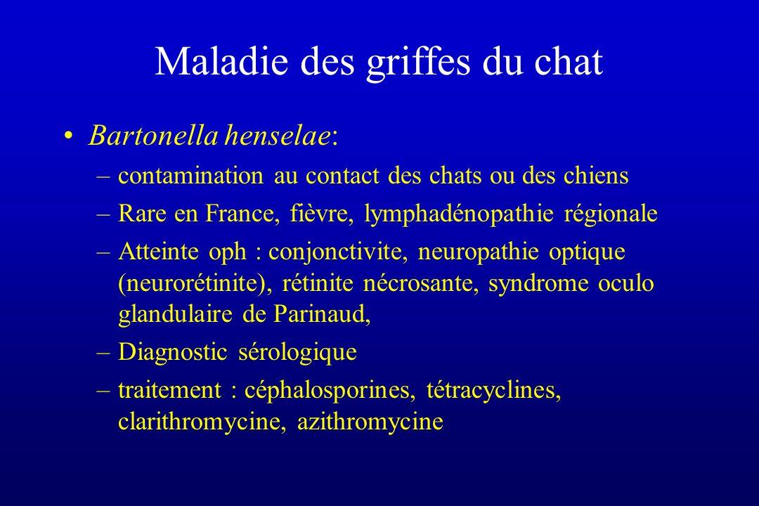 Maladie des griffes du chat Bartonella henselae: –contamination au contact des chats ou des chiens –Rare en France, fièvre, lymphadénopathie régionale