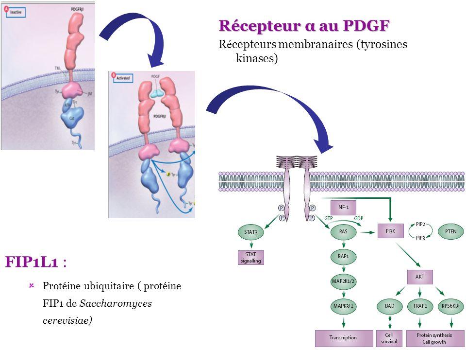 Récepteur α au PDGF R é cepteurs membranaires (tyrosines kinases) FIP1L1 : Protéine ubiquitaire ( protéine FIP1 de Saccharomyces cerevisiae)