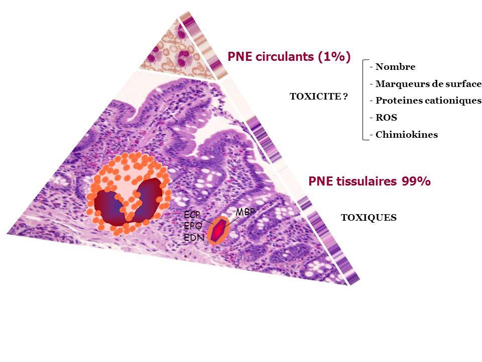PNE circulants (1%) PNE tissulaires 99% TOXICITE ? TOXIQUES - Nombre - Marqueurs de surface - Proteines cationiques - ROS - Chimiokines MBP ECP EPO ED