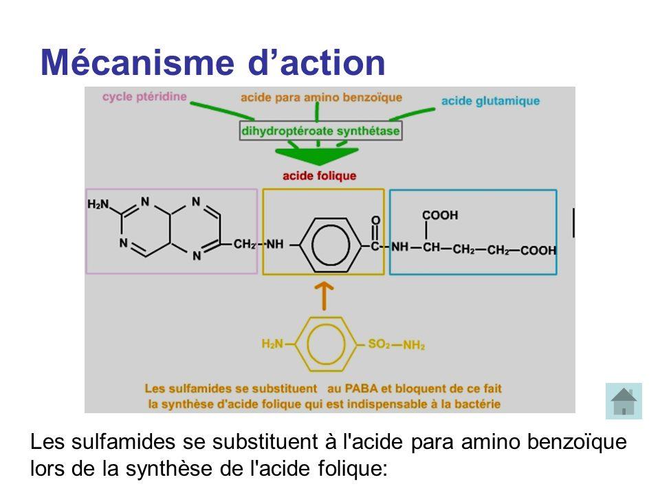 Mécanisme daction Les sulfamides se substituent à l'acide para amino benzoïque lors de la synthèse de l'acide folique: