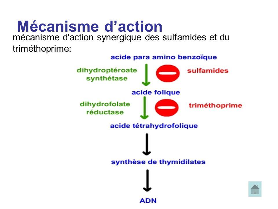 Mécanisme daction mécanisme d'action synergique des sulfamides et du triméthoprime: