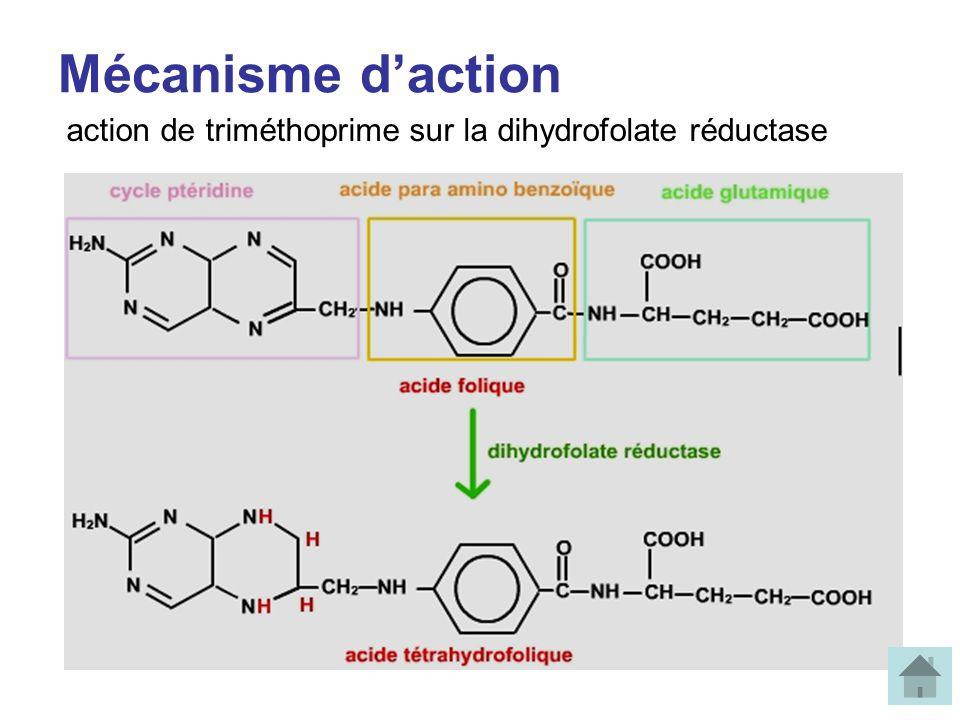 Mécanisme daction action de triméthoprime sur la dihydrofolate réductase