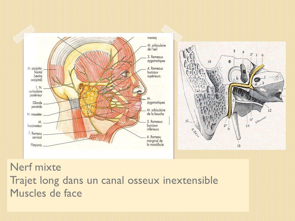 Le nerf facial Nerf mixte Trajet long dans un canal osseux inextensible Muscles de face