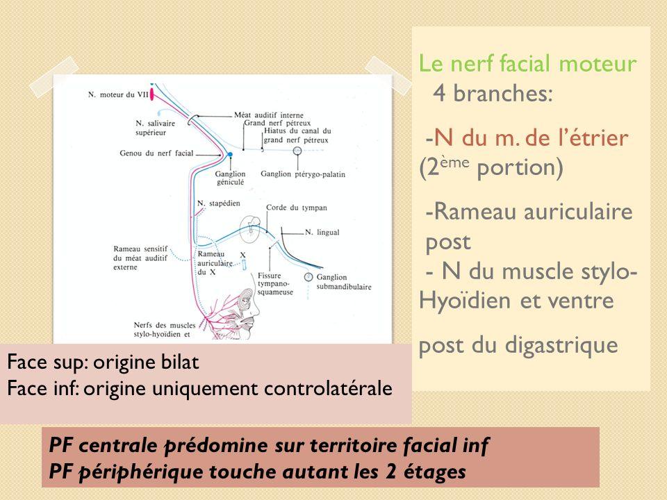 Le nerf facial moteur 4 branches: -N du m. de létrier (2 ème portion) -Rameau auriculaire post - N du muscle stylo- Hyoïdien et ventre post du digastr