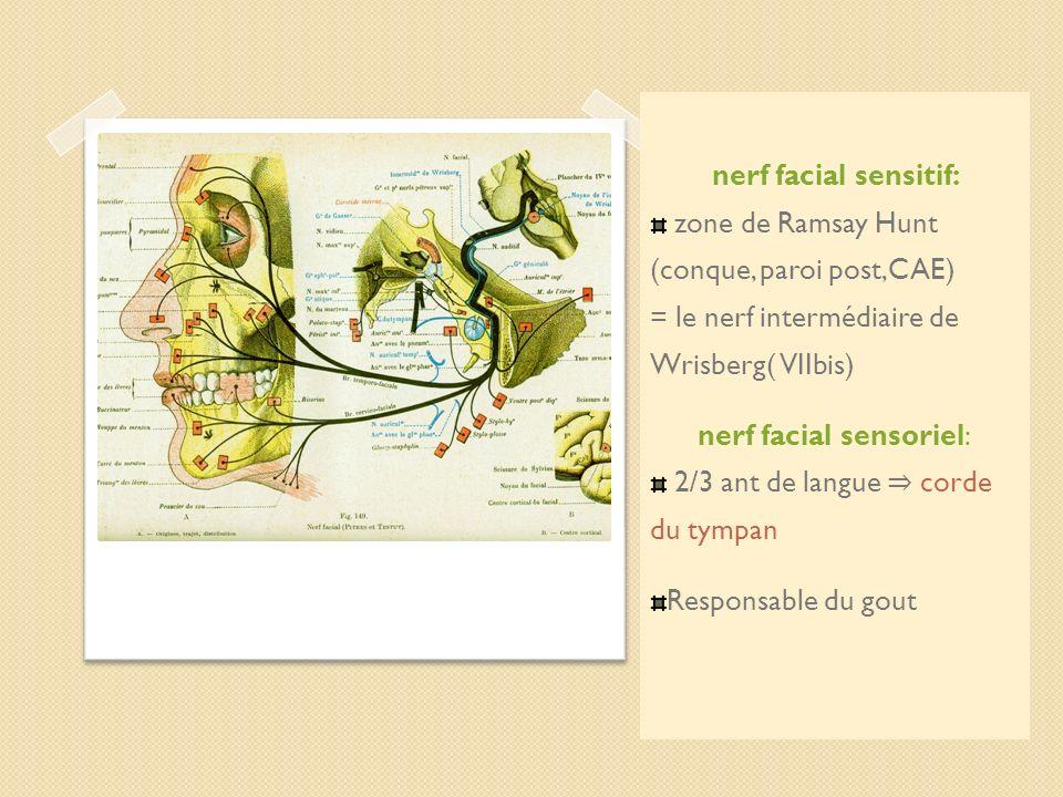 nerf facial sensitif: zone de Ramsay Hunt (conque, paroi post,CAE) = le nerf intermédiaire de Wrisberg( VIIbis) nerf facial sensoriel: 2/3 ant de lang