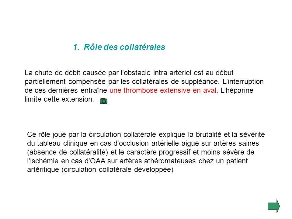 3.Physiopathologie Les conséquences de linterruption brutale du flux artériel dépendent de plusieurs paramètres : La durée de lischémie La quantité de