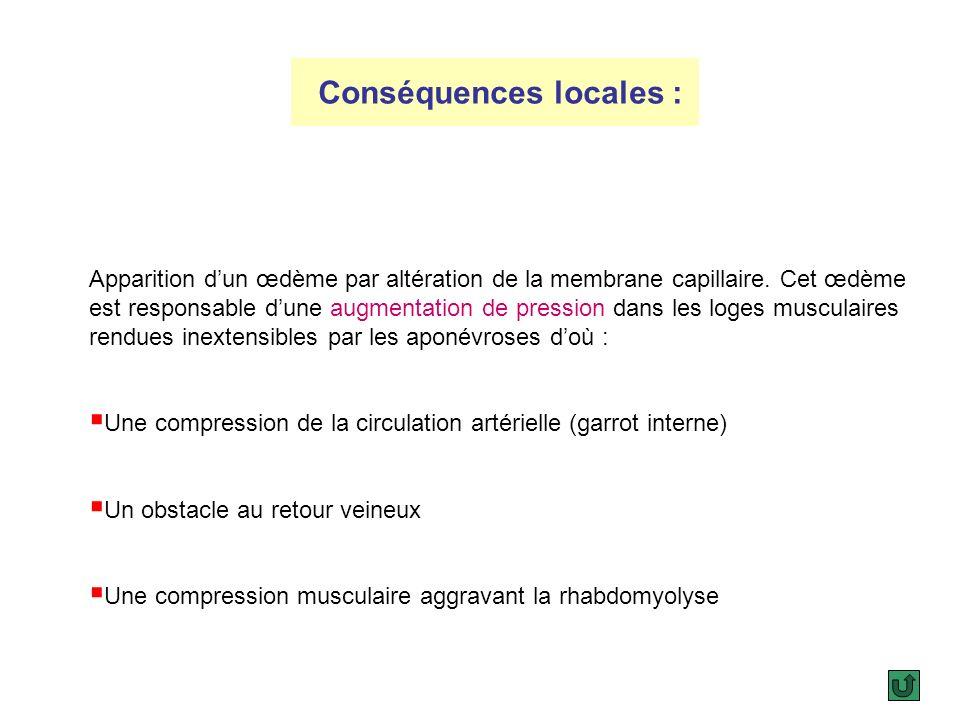 4.Syndrome de revascularisation : Cest lensemble des conséquences du rétablissement brutal de la circulation du membre ischémique. Ces conséquences so