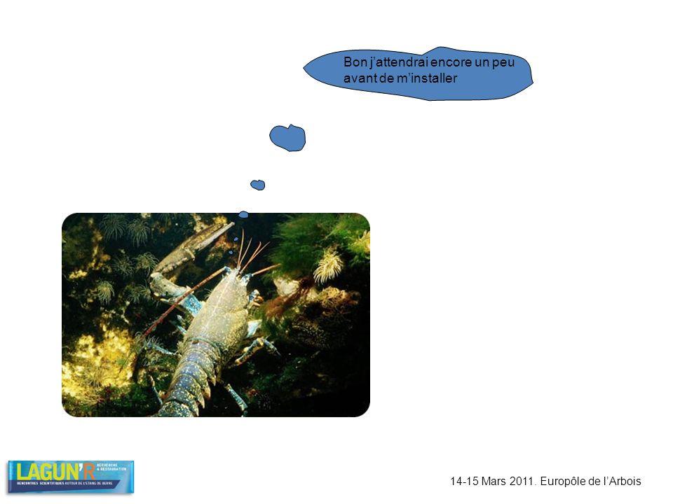 14-15 Mars 2011. Europôle de lArbois Bon jattendrai encore un peu avant de minstaller