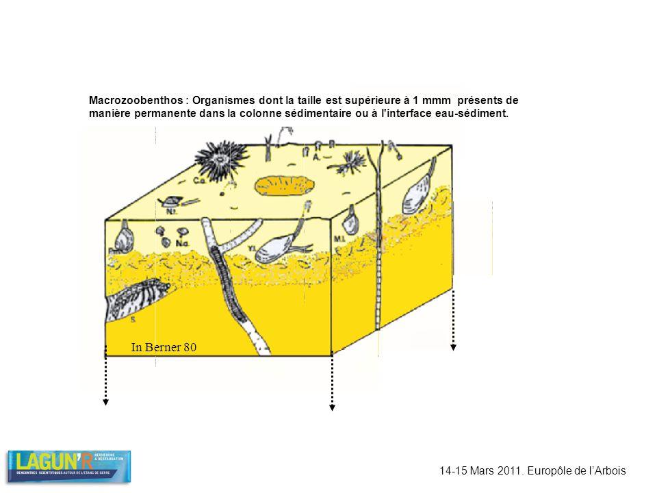 In Berner 80 14-15 Mars 2011. Europôle de lArbois Macrozoobenthos : Organismes dont la taille est supérieure à 1 mmm présents de manière permanente da