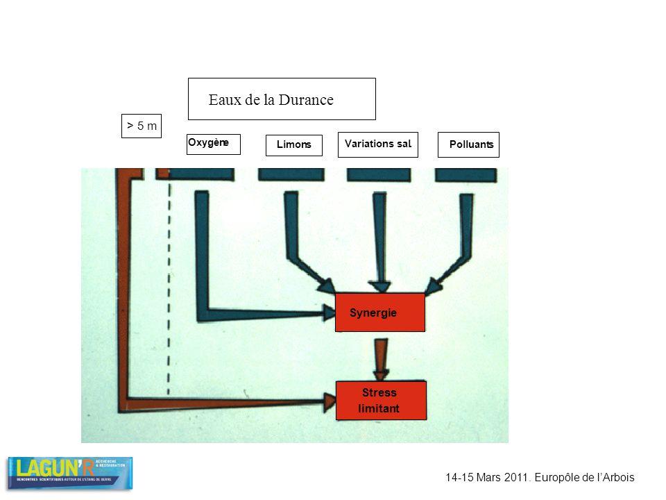Eaux de la Durance > 5 m Oxygène Limons Variations sal. Polluants Synergie Stress limitant