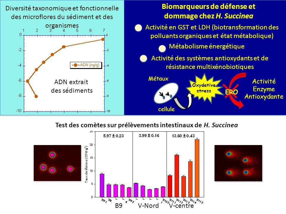 ADN extrait des sédiments Activité des systèmes antioxydants et de résistance multixénobiotiques Activité Enzyme Antioxydante cellule Oxydative stress
