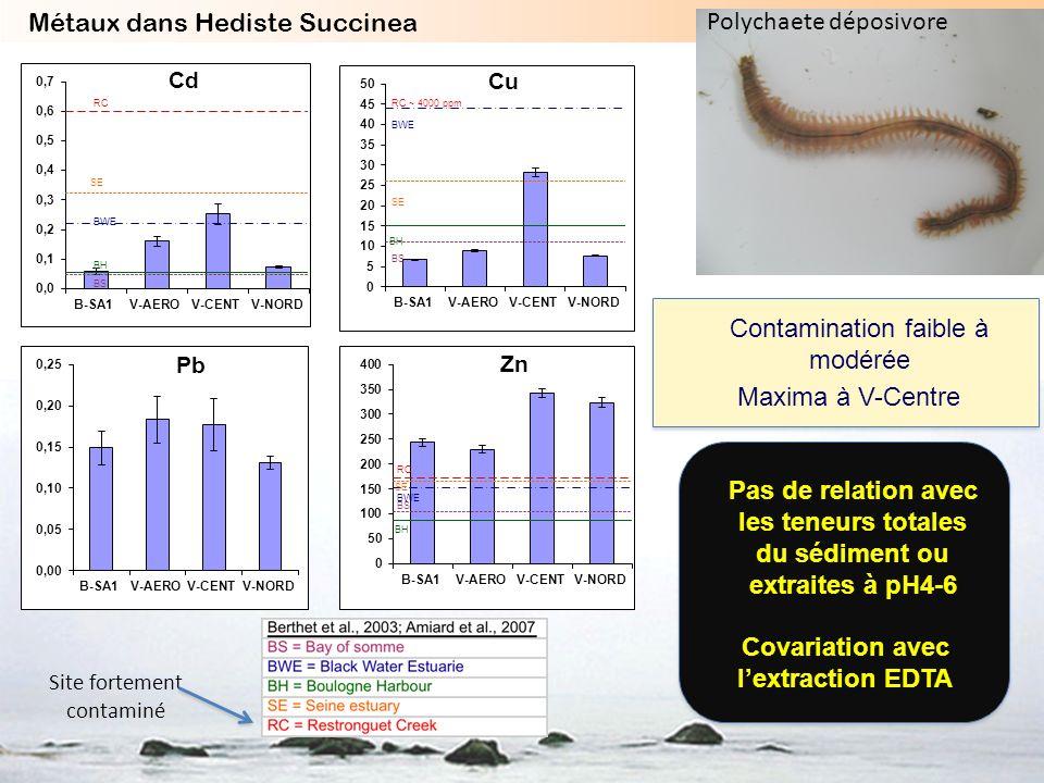 SE RC BH BWE BS RC BH SE BWE BS RC ~ 4000 ppm BH SE BWE BS Contamination faible à modérée Maxima à V-Centre Covariation avec lextraction EDTA Métaux d
