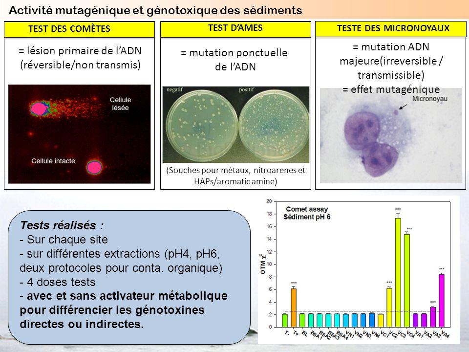 = lésion primaire de lADN (réversible/non transmis) TEST DES COMÈTES = mutation ponctuelle de lADN (Souches pour métaux, nitroarenes et HAPs/aromatic