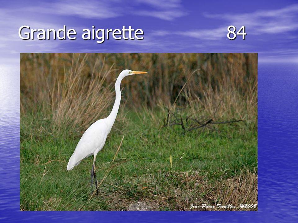 Grande aigrette84