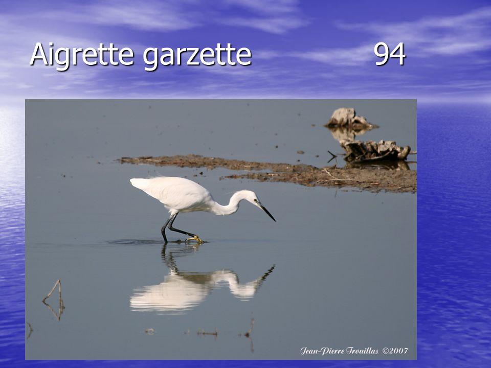 Aigrette garzette94