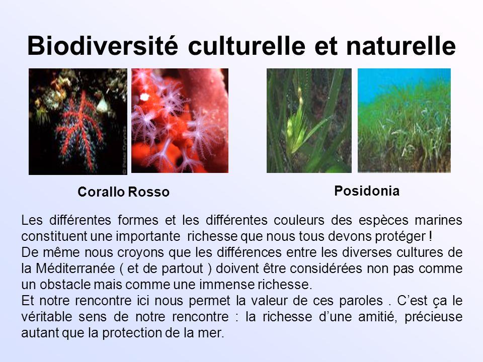 Biodiversité culturelle et naturelle Corallo Rosso Posidonia Les différentes formes et les différentes couleurs des espèces marines constituent une im