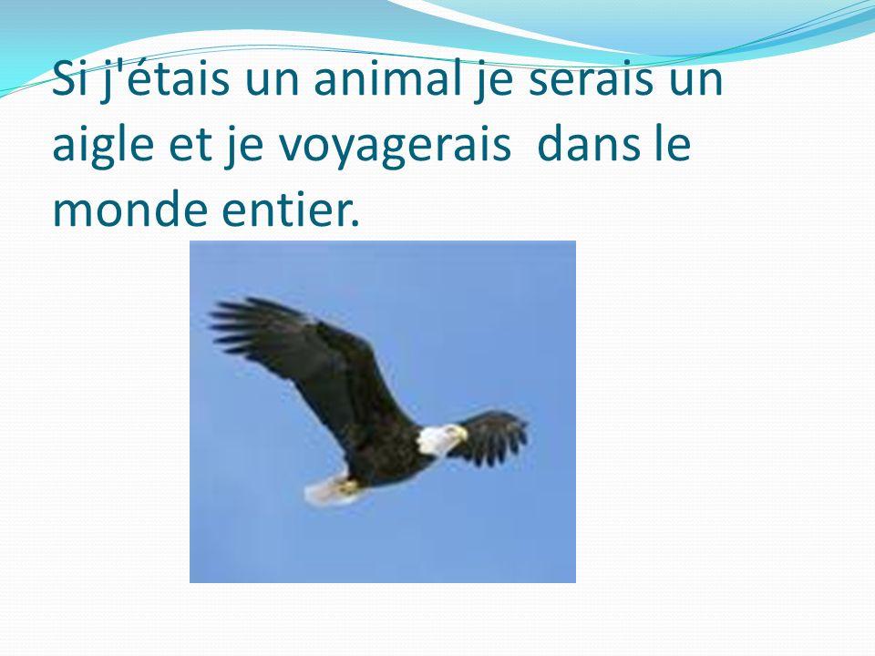 Si j'étais un animal je serais un aigle et je voyagerais dans le monde entier.